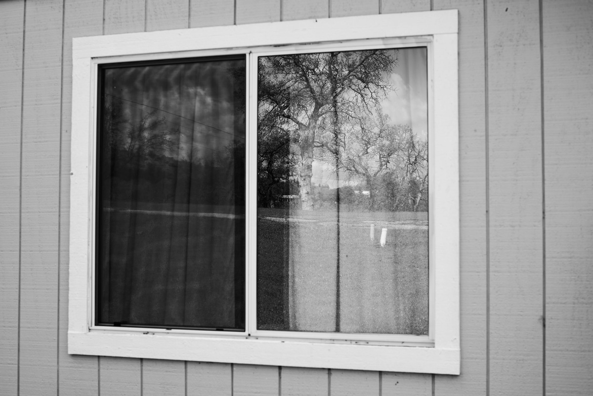 Picture of a window in black and white, in its reflection are trees from a distant